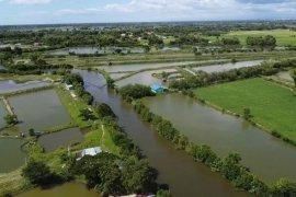 Land for sale in Malawa, Pangasinan