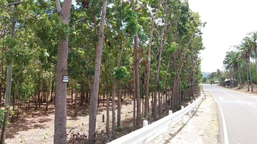 1.5-ha land for sale along the highway in siquijor