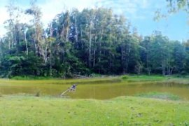 Land for sale in Dumarao, Palawan