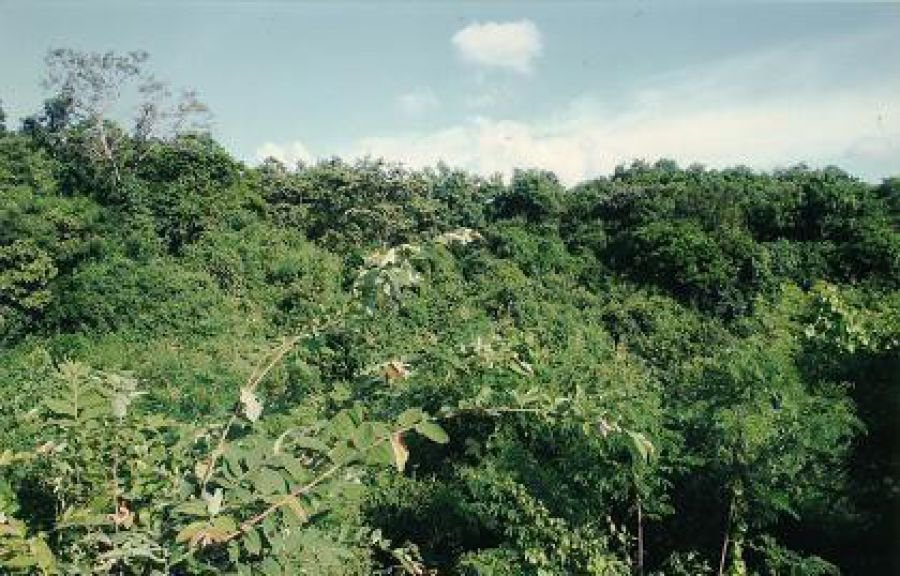 agricultural lot for sale in jamindan,