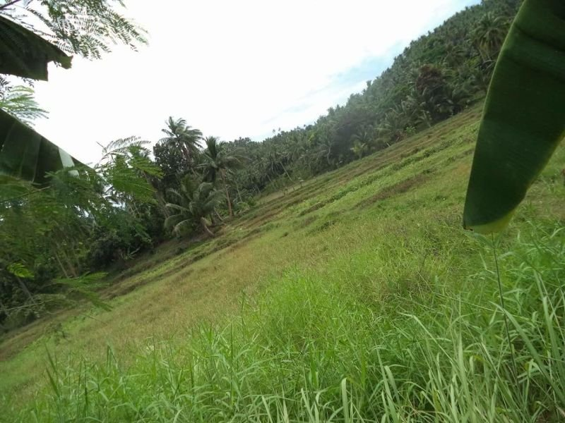 lot in masbate good for farm, mining & subdivision