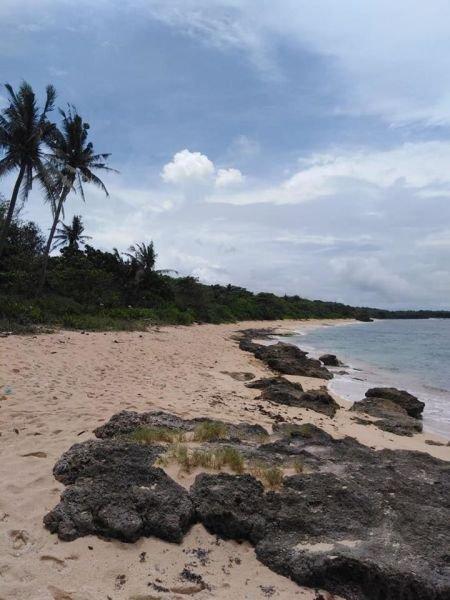 46.6 hectares beachfront-white sand, bolinao