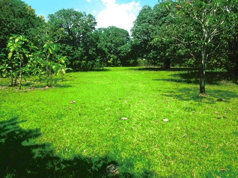 6.5 hectares mango farm, villasis, pangasinan