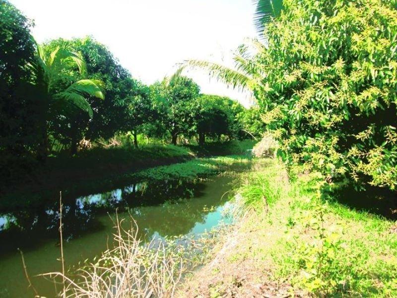 6.5 hectares with 387 mango trees, 18 fish pen, pangasinan