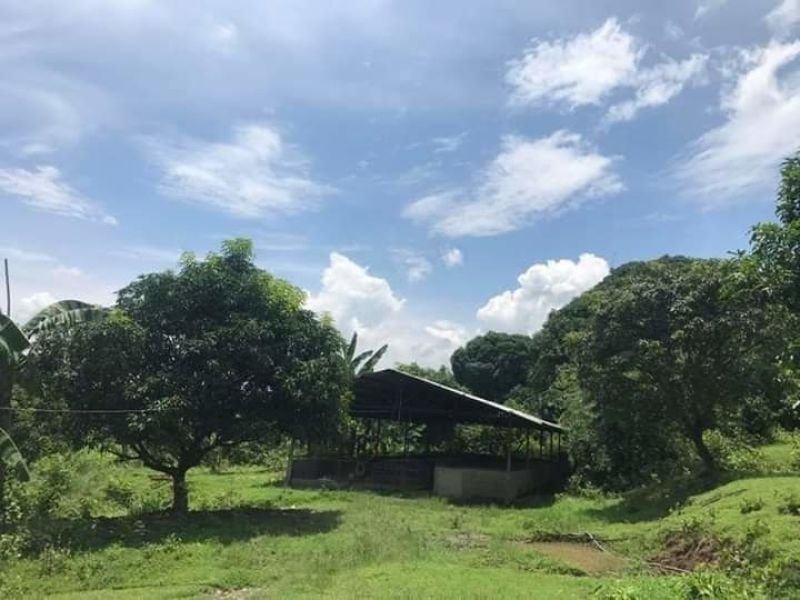1.6 hectares lot with piggery for sale, sison, pangasinan