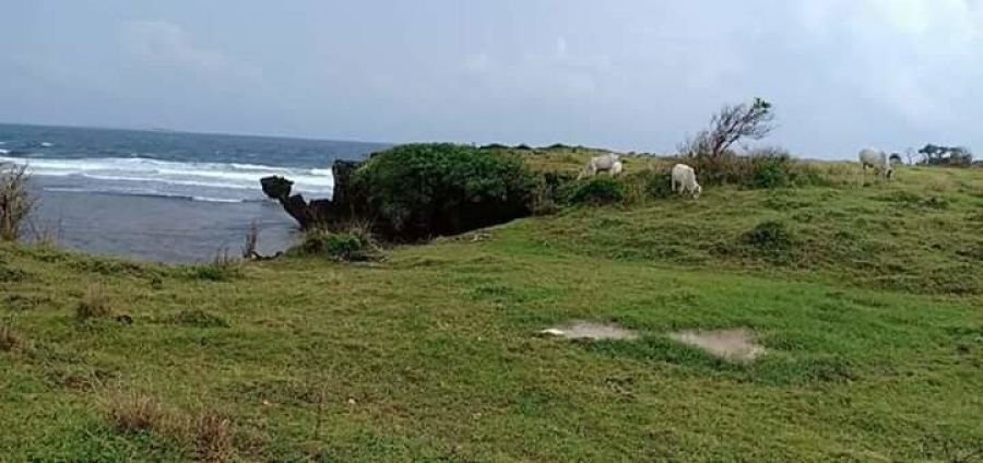 3.2 hectares island for sale, dasol, pangasinan