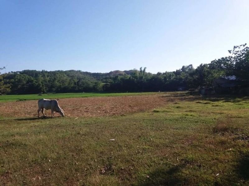 22,869 sqm farm lot for sale, bugallon, pangasinan
