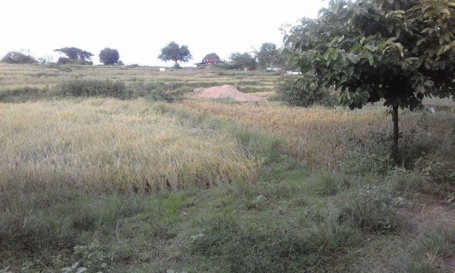 10 hectares farm land, bolinao, pangasinan