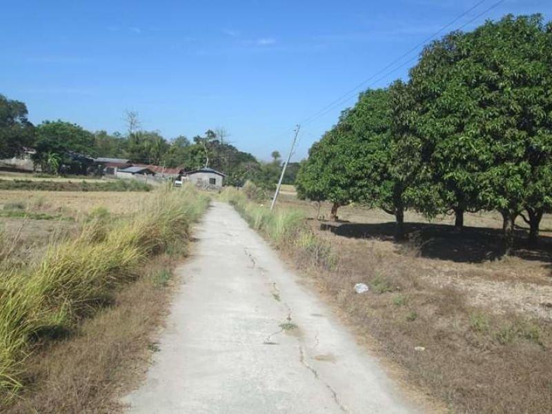 2.9 hectares lot, umingan, pangasinan