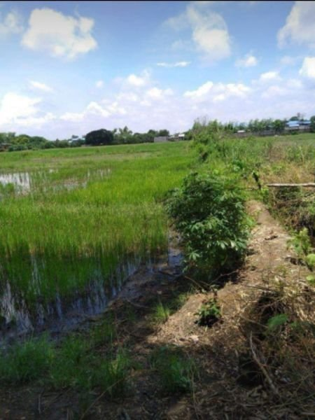 119 hectares lot for sale, mangatarem, pangasinan