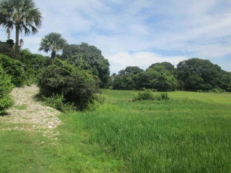 1.9 hectares lot, tunnelvent poultry, malasiqui, pangasinan