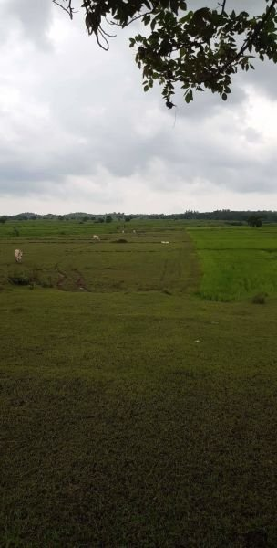 4.3hectares for poultry, with permits, umingan pangasinan