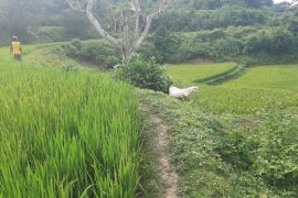 Land for sale in Inabaan Norte, La Union