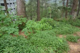 Hotel and resort for sale in Gibraltar, Baguio
