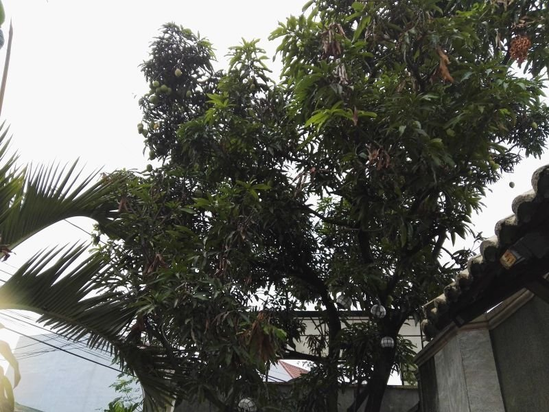 land for sale in calumpit, bulacan
