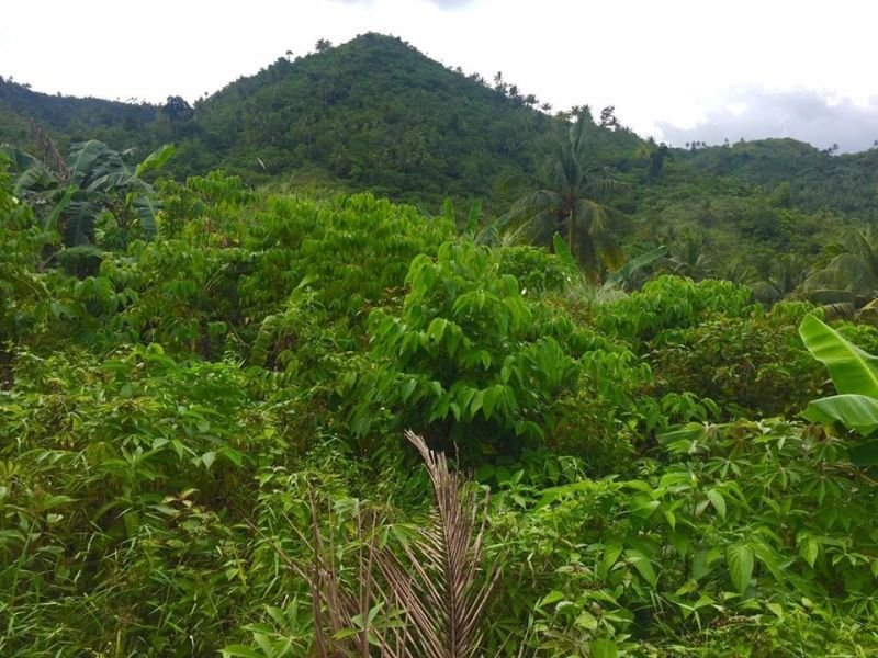 mountain for sale farm land