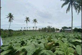Land for sale in Poblacion, Misamis Oriental