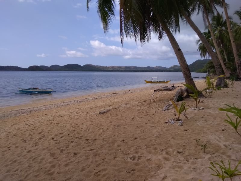 white sand beach lot in busuanga for sale