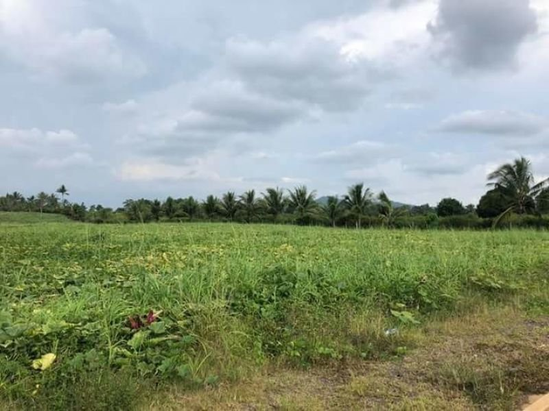 2has lot along brgy road for sale in manolo fortich,bukidnon