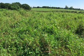 Land for sale in Tarlac