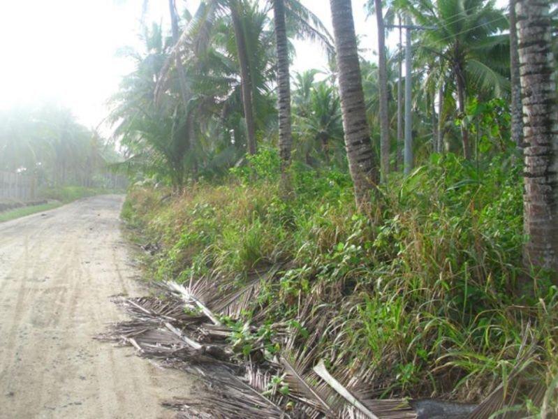 3.9160 hectares farm lots at mati city