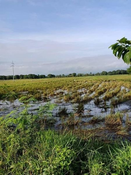2 hectare farm lot in hermosa, bataan