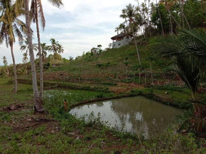 overlooking lot with house, rice field and fish pond