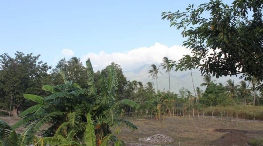 building lot for sale in dauin