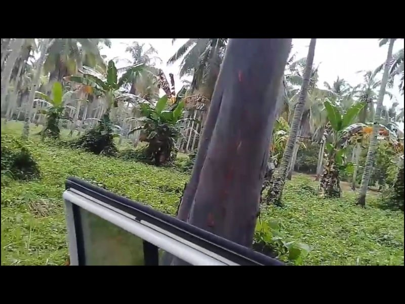 13 hectares coconut and flower bearing mango cebu