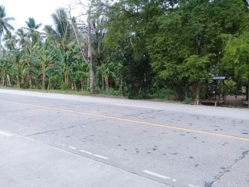 5.3 hectares coconut farm along the national road