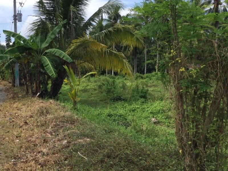 1.7 hectares coconut farm infront the school