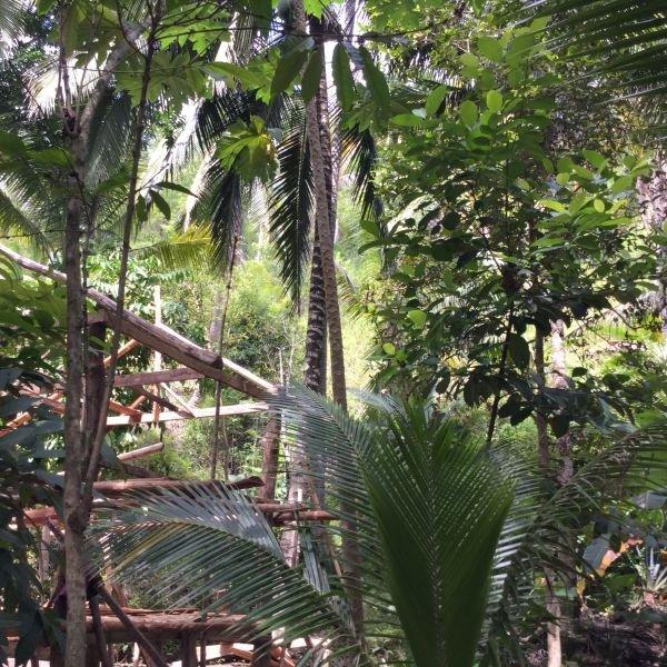 6 hectares coconut banana rubber gemilina trees