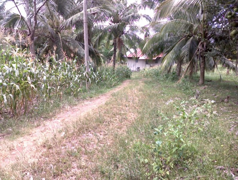 lot for sale in manolo