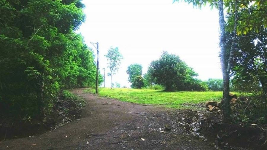 20 hectares mango plantation for sale in guimaras