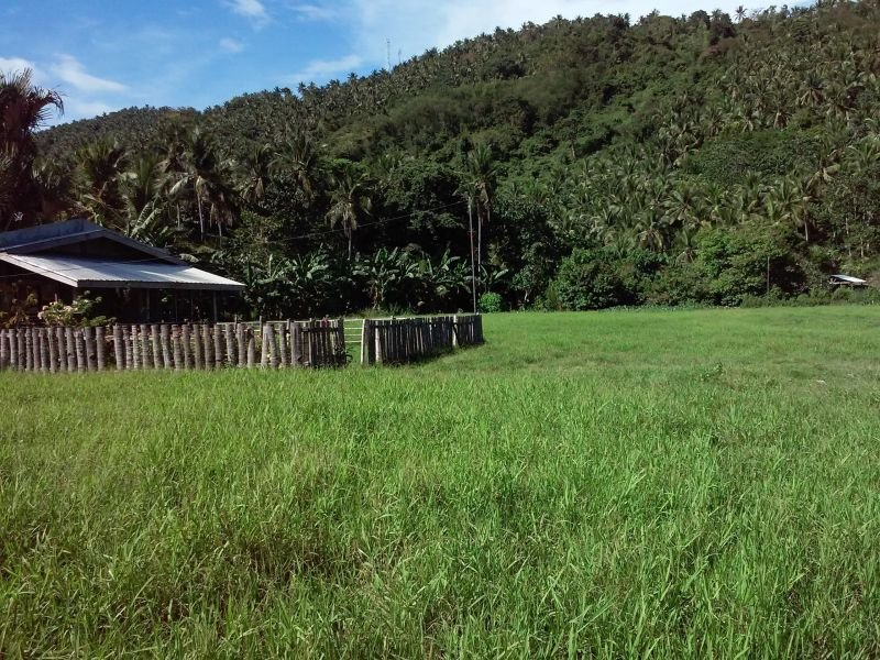 5,000 sqm land and house near the beaches and in a beautiful greenfield
