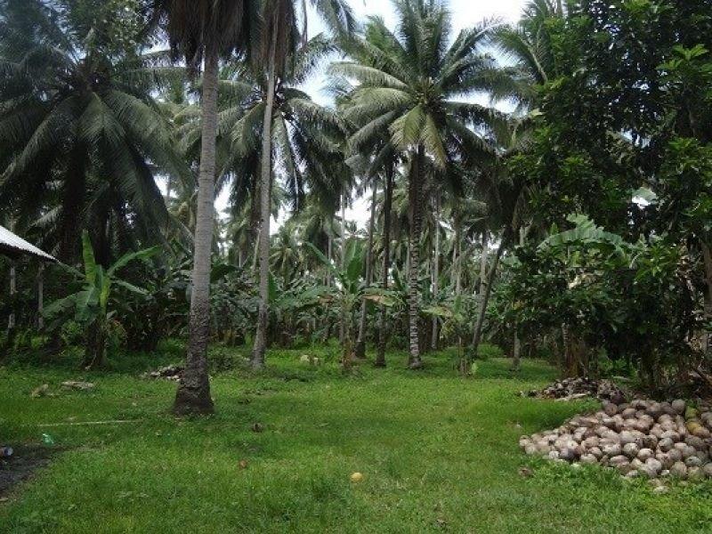 4.25 hectars farm lot for sale, cocornon, lupon, davao orein