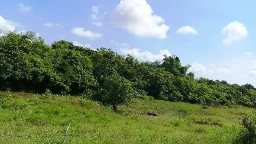 lot for sale bolinao pangasinan