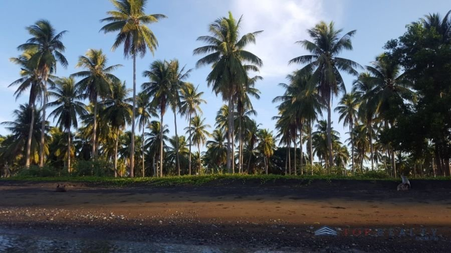 lot for sale i coconut farm palawan in the municipality of n - 3014082