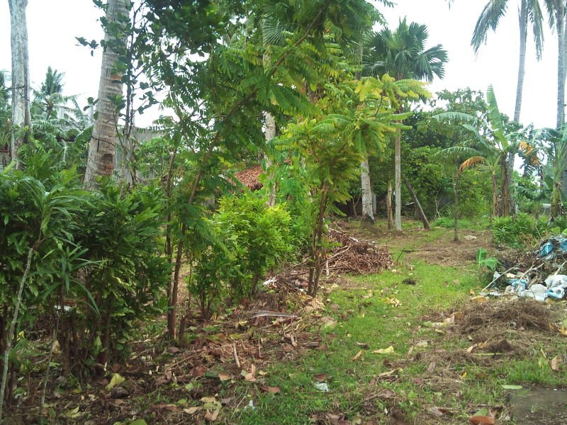 albay property for sale commercial -bicol region