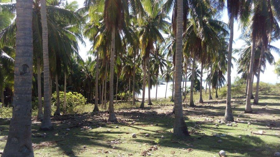 beach lot in maria