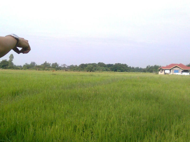 2.5 hectares agricultural land for sale in botolan, zambales