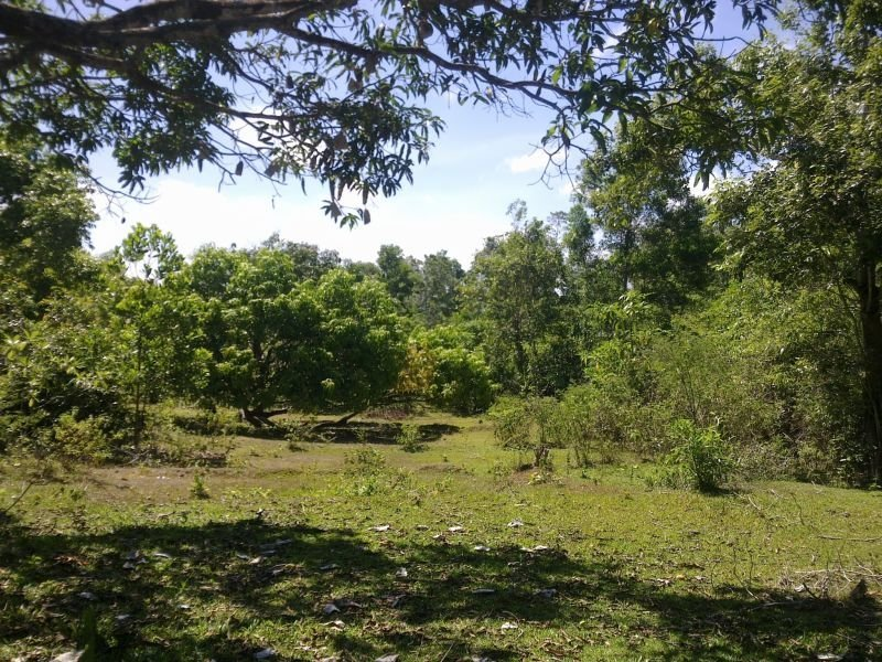 farm land and orchard for sale in guimaras at 100 per sqm