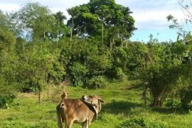 Land for sale in Upli, Cavite