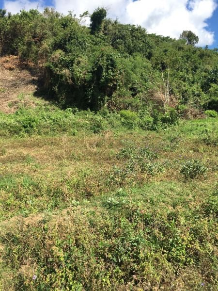 land for sale in n.ecija 3 hectares