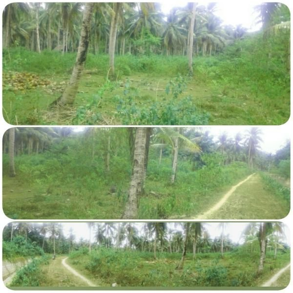 titled lot for sale in siargao