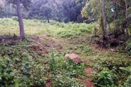 Land for sale in Cantoyoc, Bohol