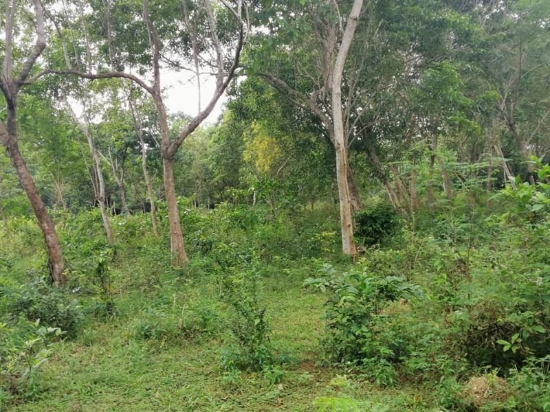 1,710 sqm title near h.way & airport in panglao island