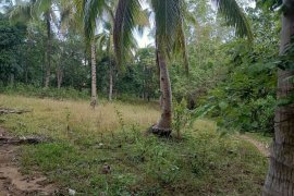 Land for sale in Cantumog, Cebu