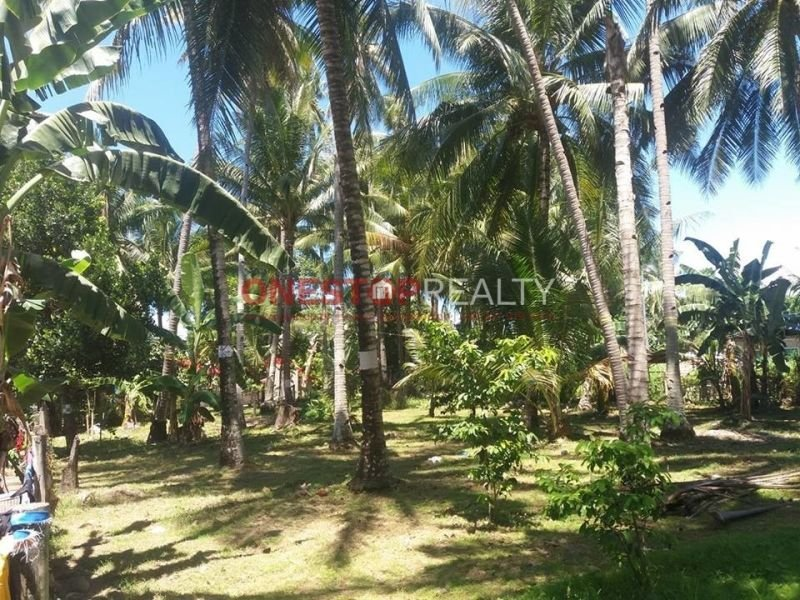 lot for sale in bacong, dumaguete city