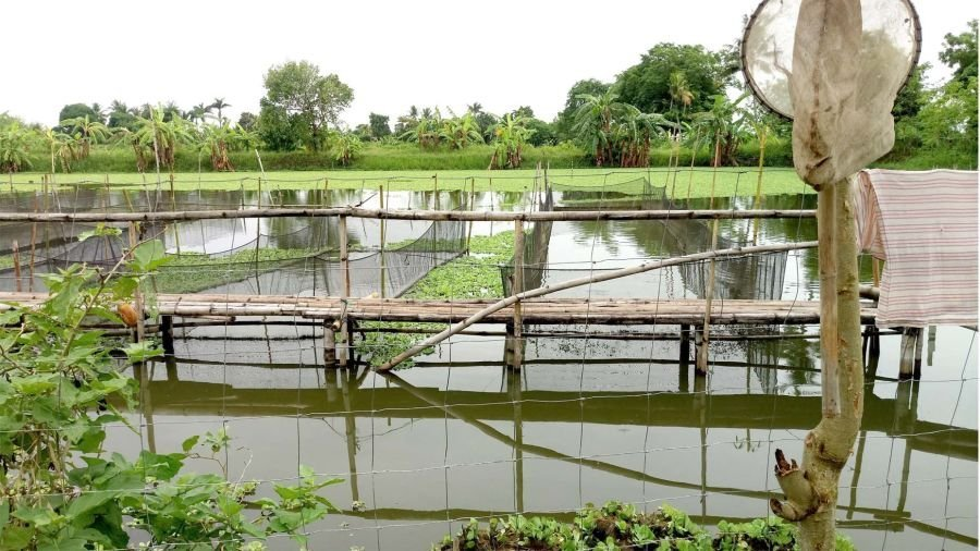 fishpond for sale- freshwater - 4 hectares -p550 per sqm